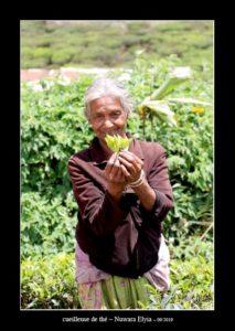 cueilleuse de thé à Nuwara Elyia - thierry llopis photographies (www.thierryllopis.fr)
