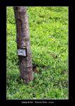 dans un champ de thé à Nuwara Elyia. - l'autre ailleurs au Sri-Lanka, une autre idée du voyage